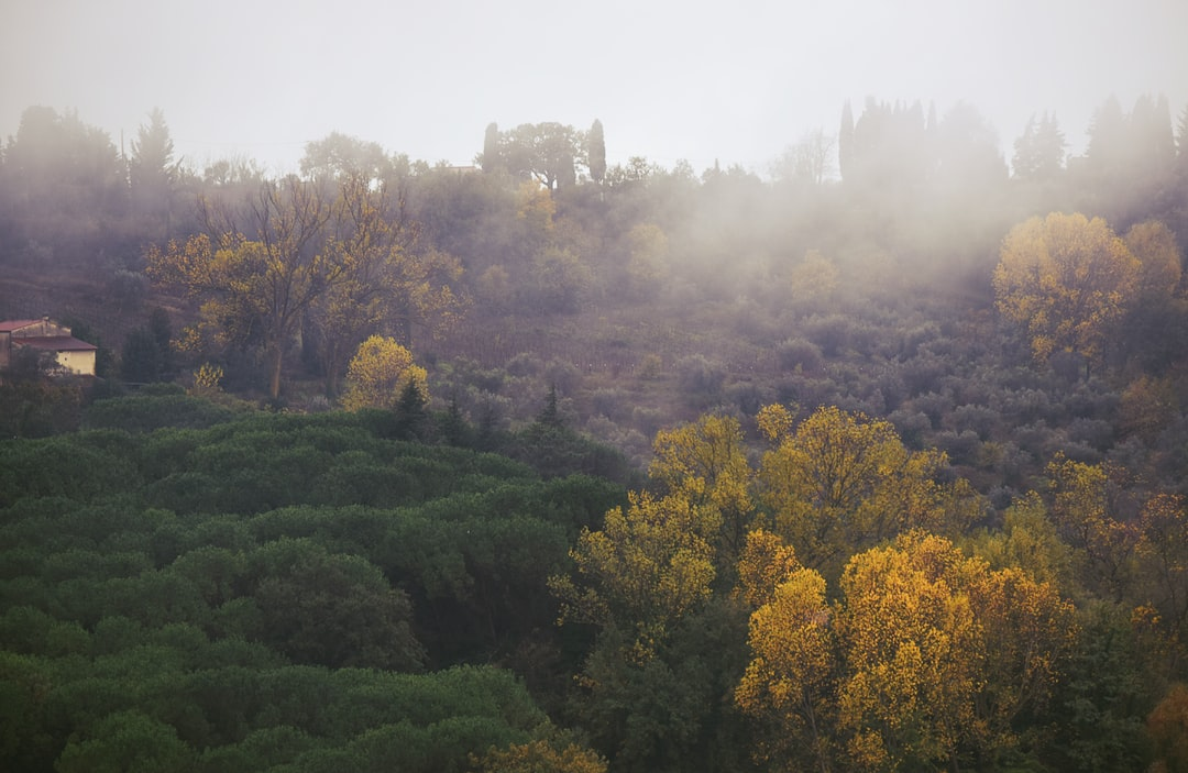 A foggy morning, Tuscany Collection