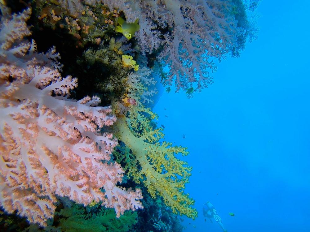 underwater photo of seaweeds