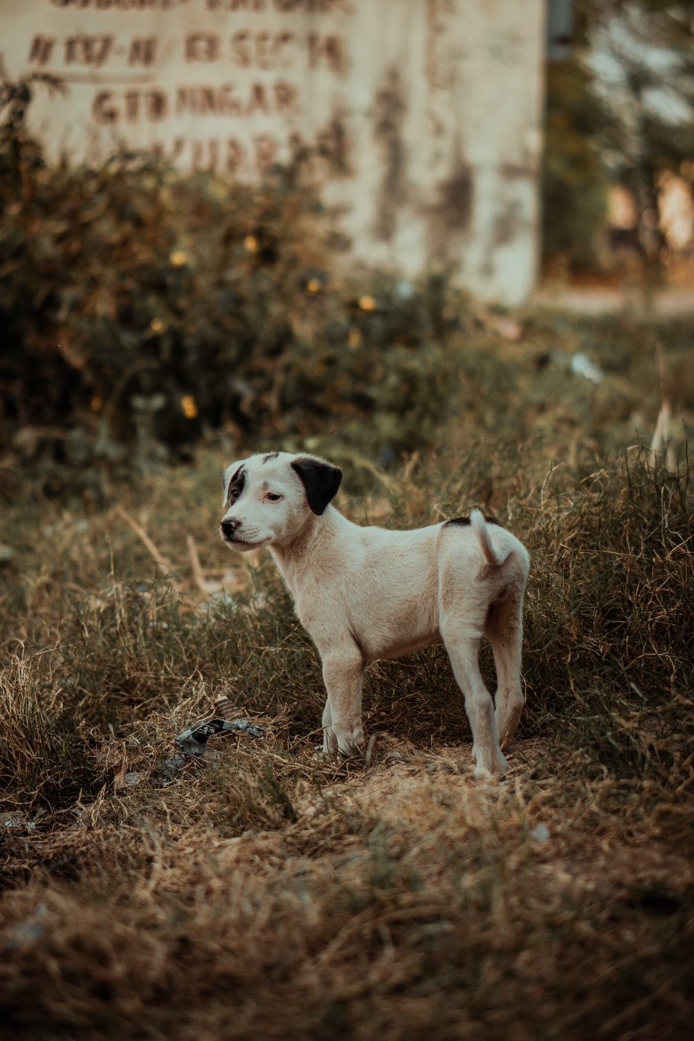selective focus photography of white puppy on green grass