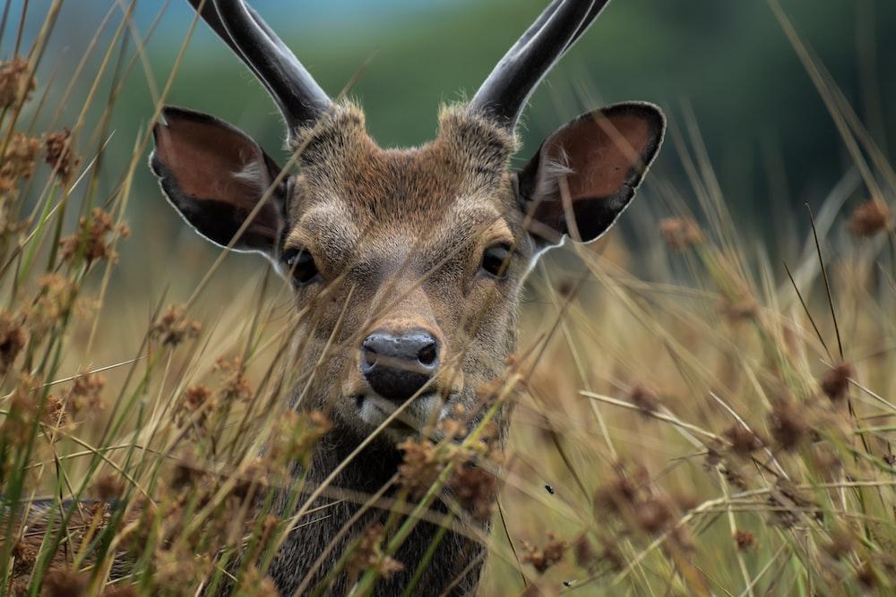 selective focus photography of brown deer behind plants
