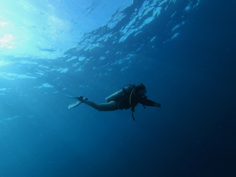 person diving underwater