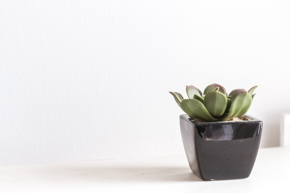 green succulent with gray vase