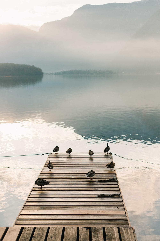 birds on brown wooden dock during daytime