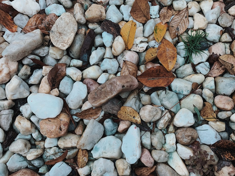 fallen leaves on brown and gray stones