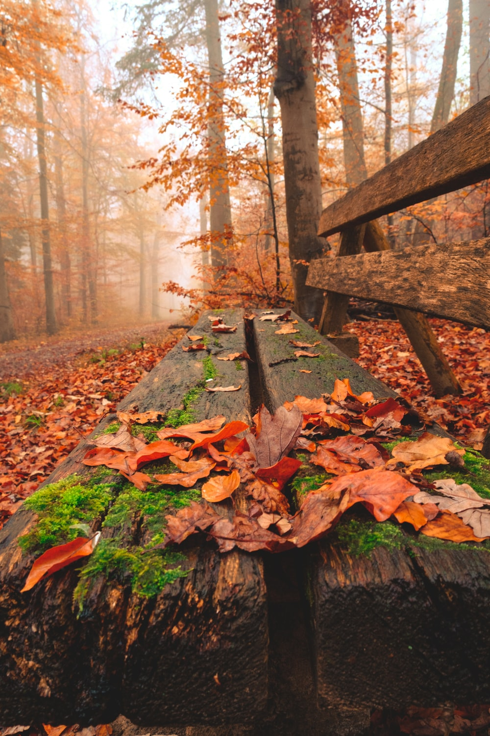 withered leaves covered on brown wooden bench