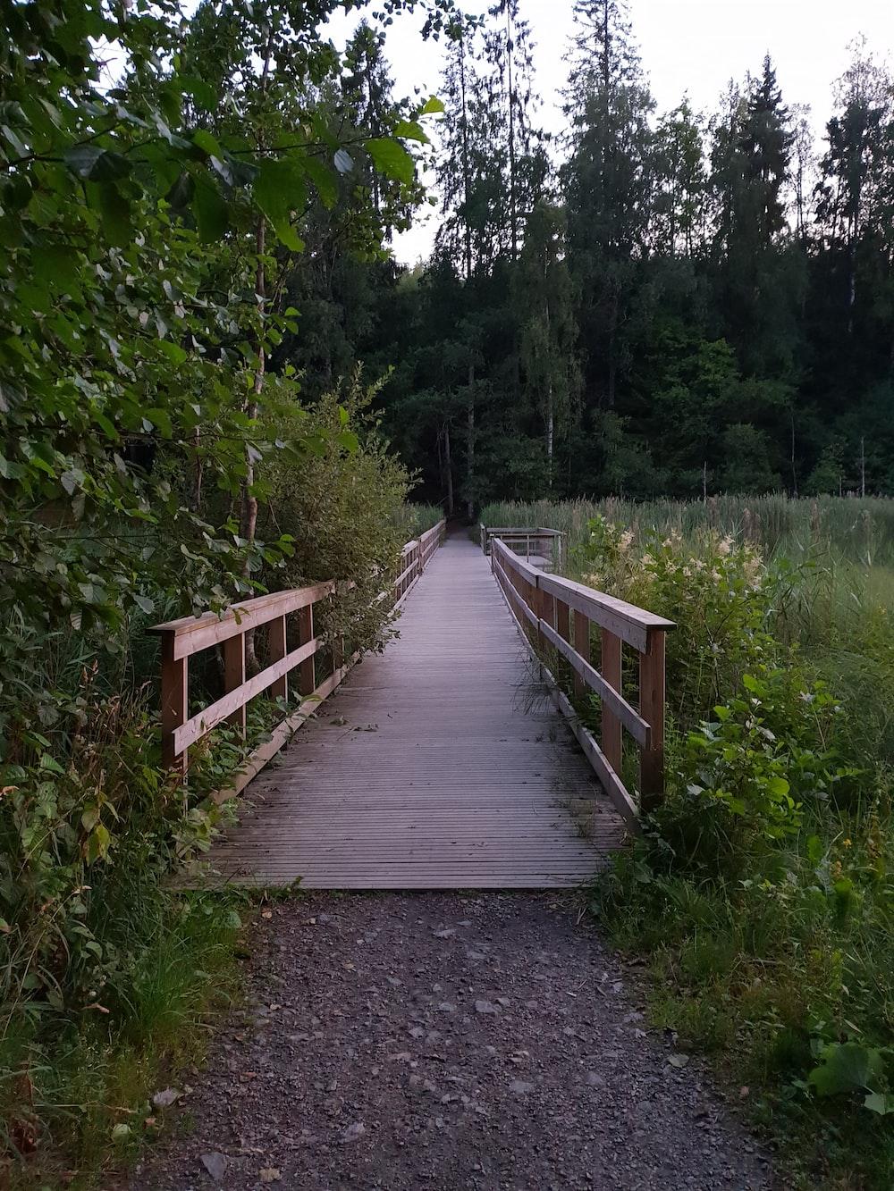 brown wooden bridge beside trees during daytime