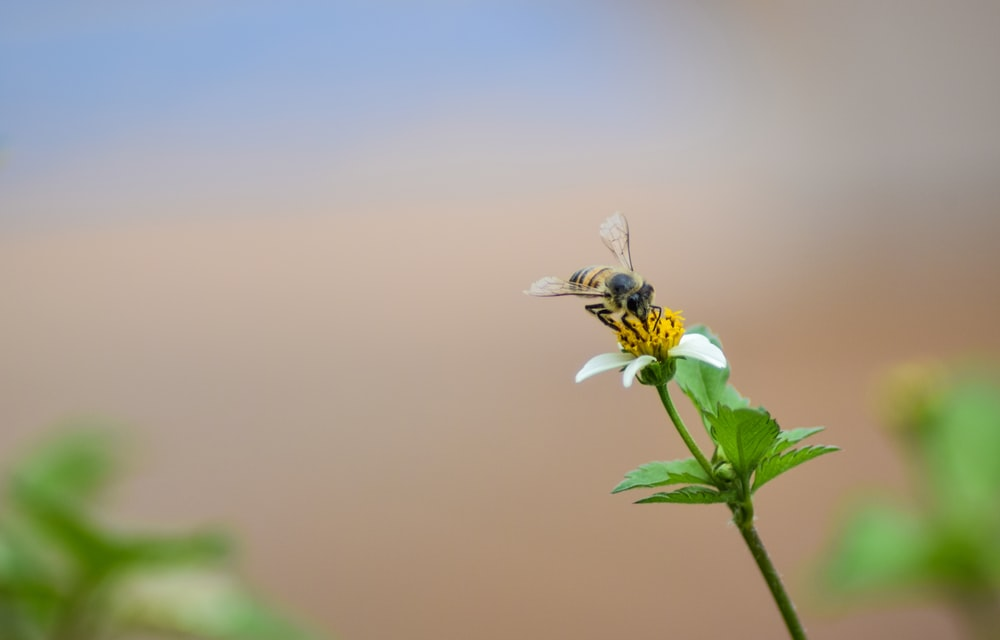 bee sipping nectar on flower
