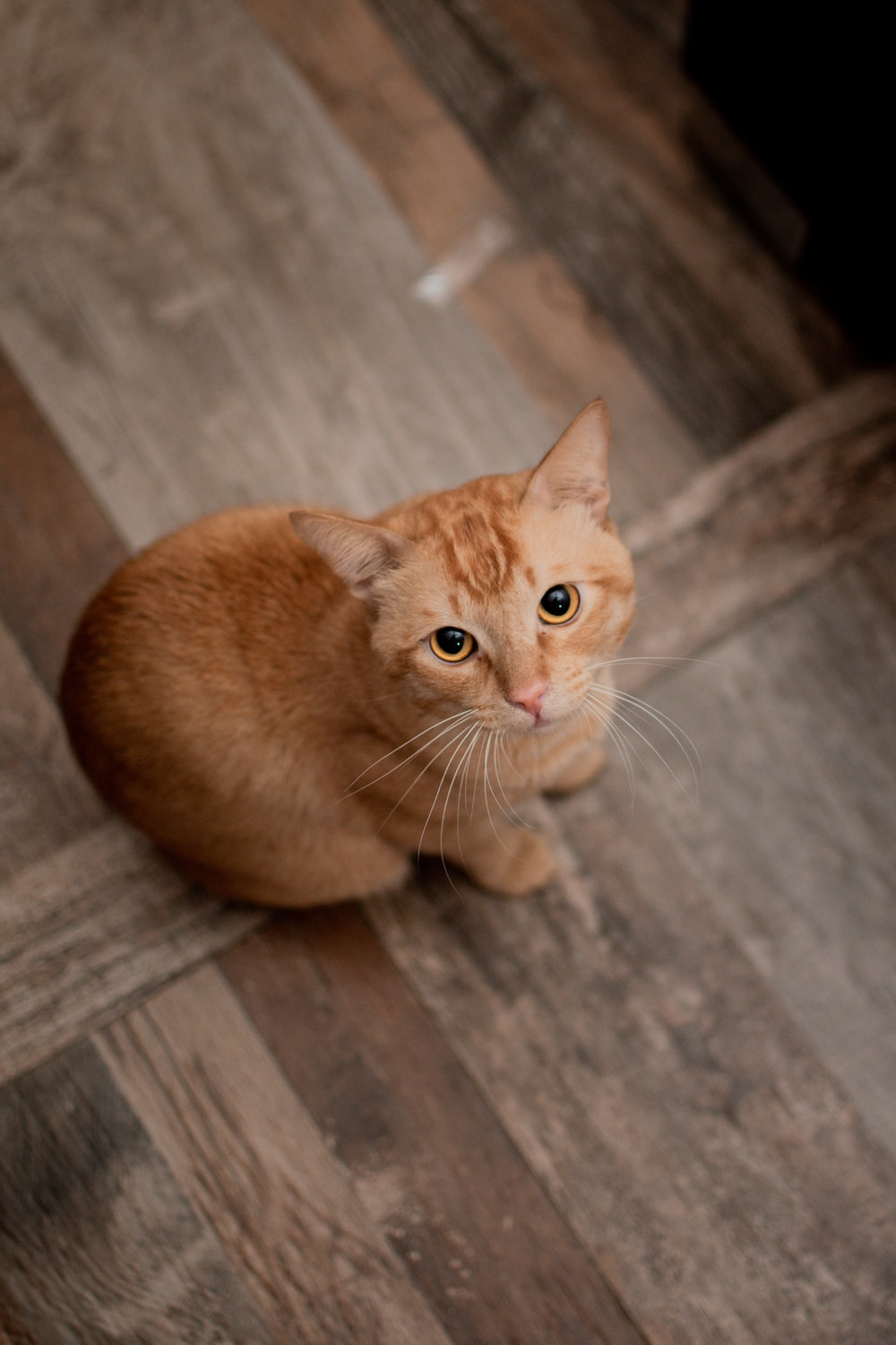 Pussy Cat Pictures   Download Free Images on Unsplash