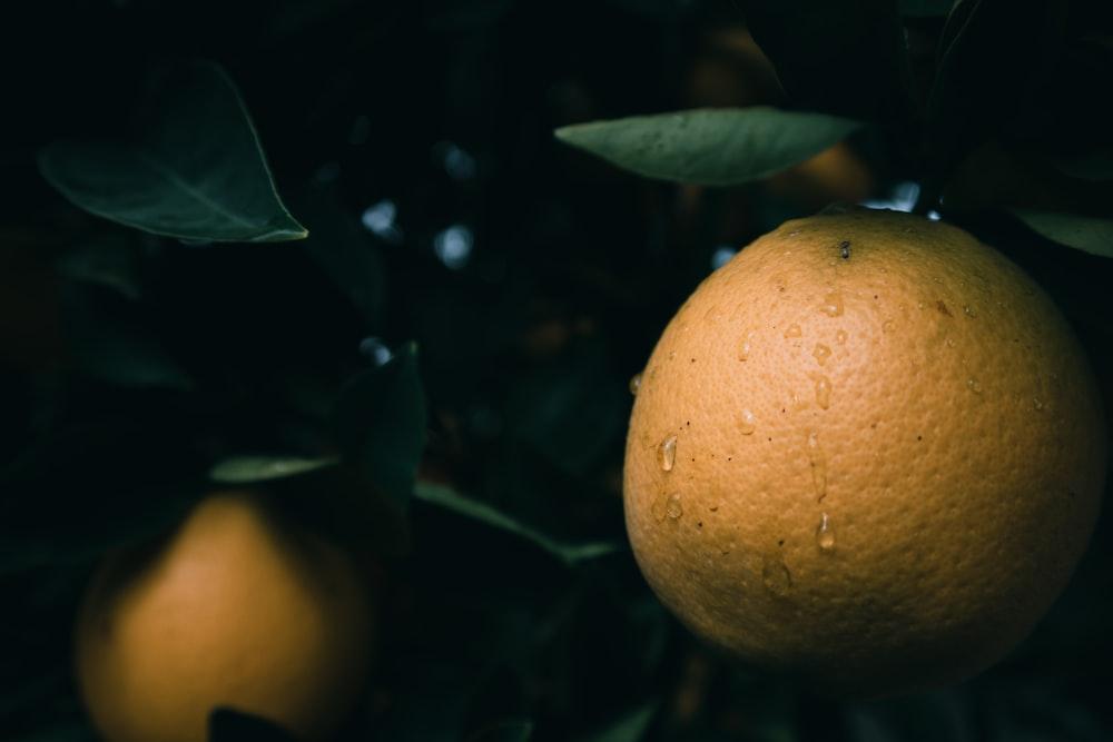 selective focus photo of citrus fruit