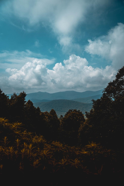 trees overlooking mountain ridge