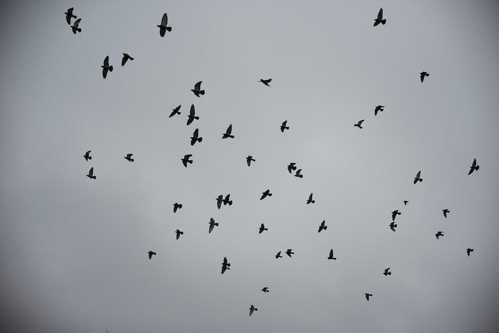 flock of birds on sky