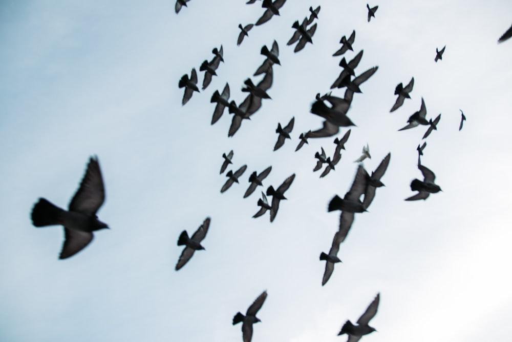 flocks of grey birds flying during daytime
