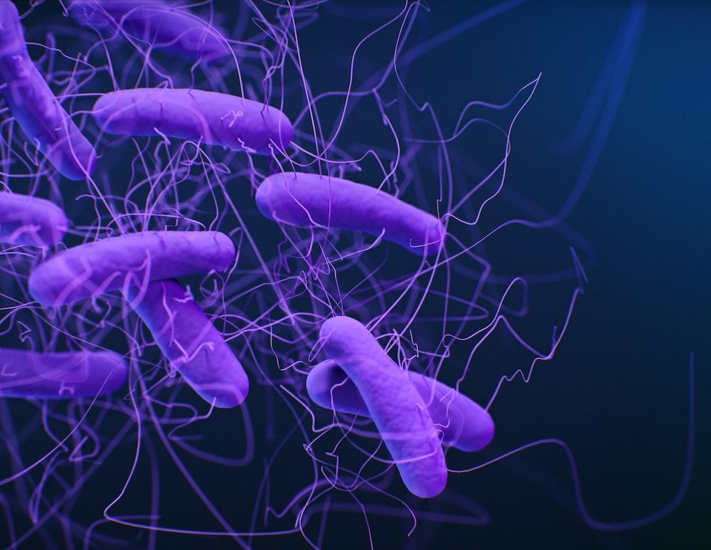 purple bacterias