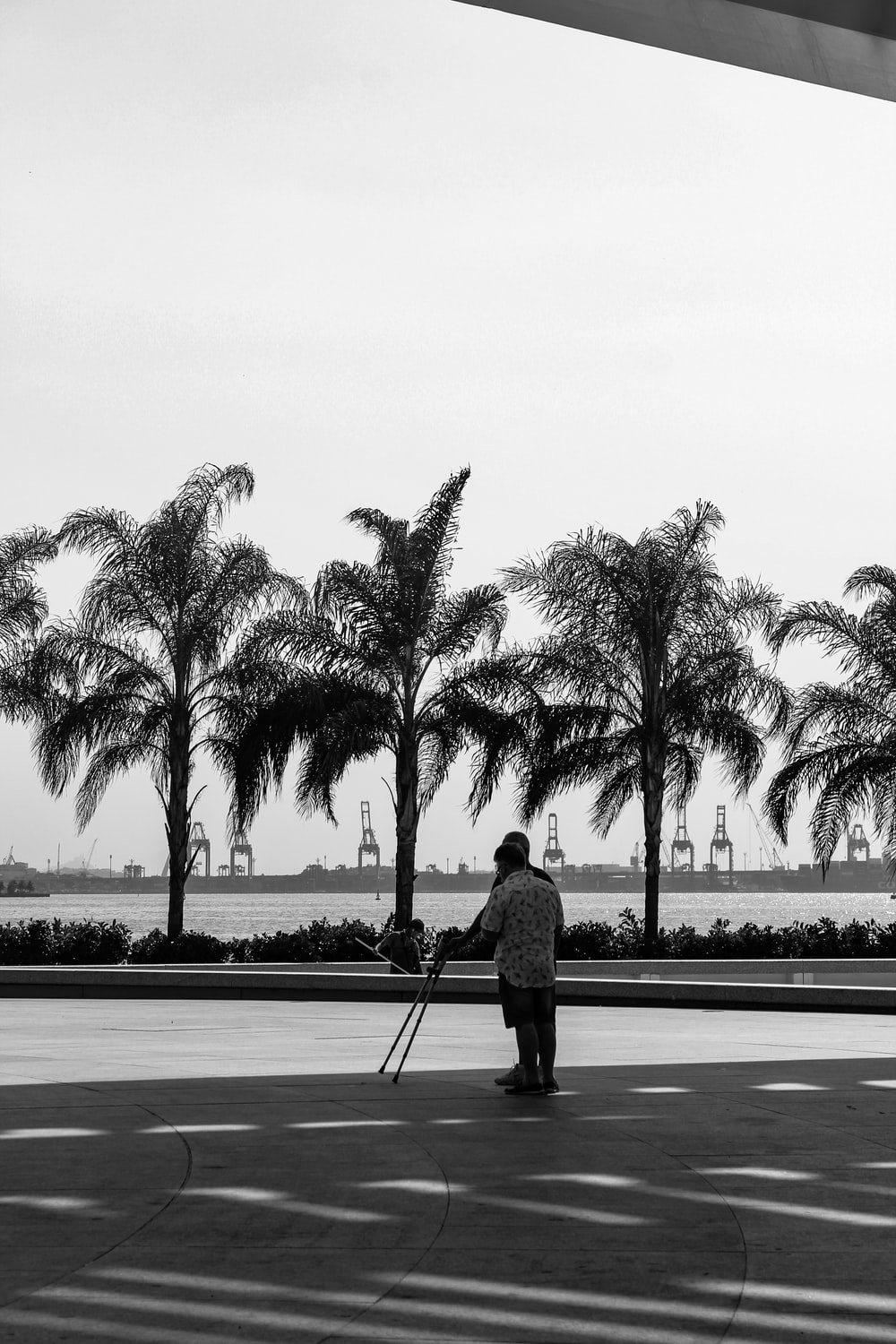 person near trees and sea during day