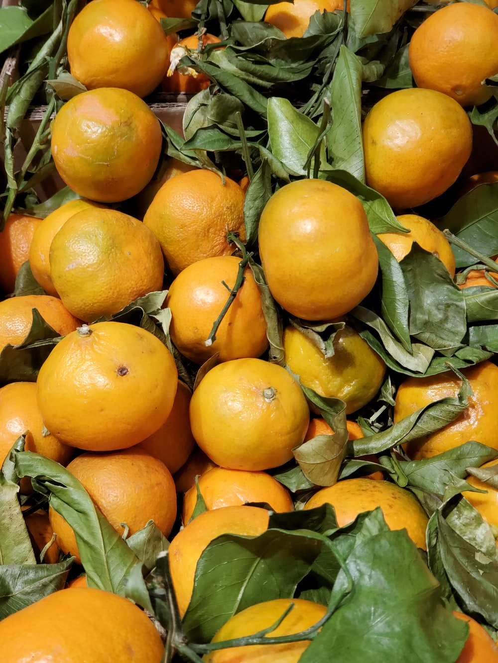 bunch of orange fruits