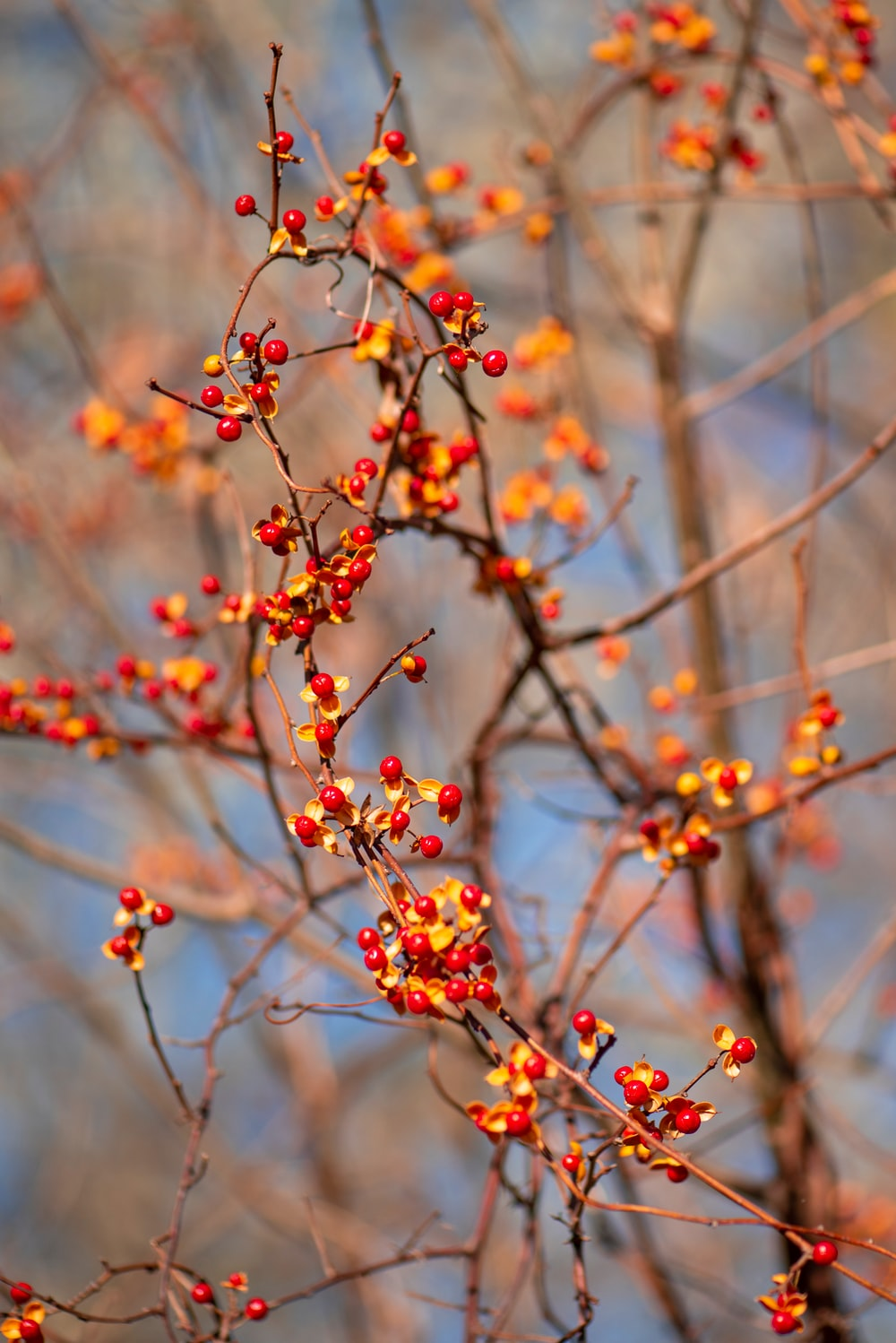 selective focus photo of orange and red berries