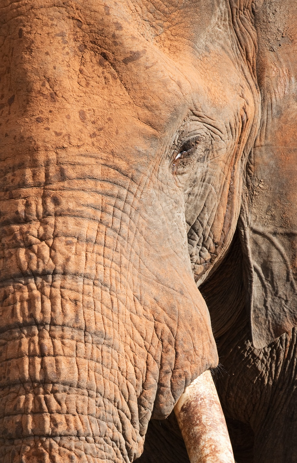 close-up photo of brown elephant