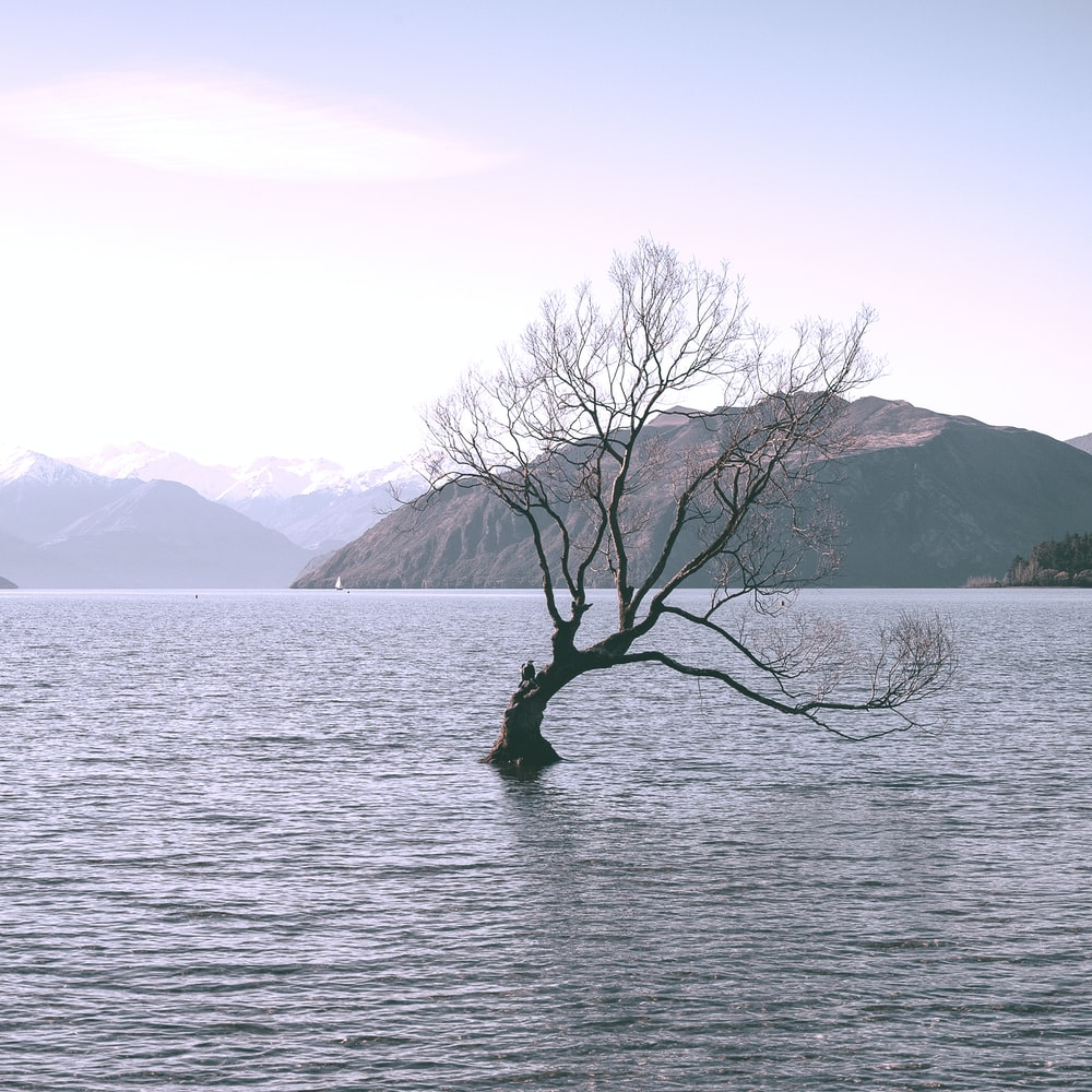bare tree on body of water