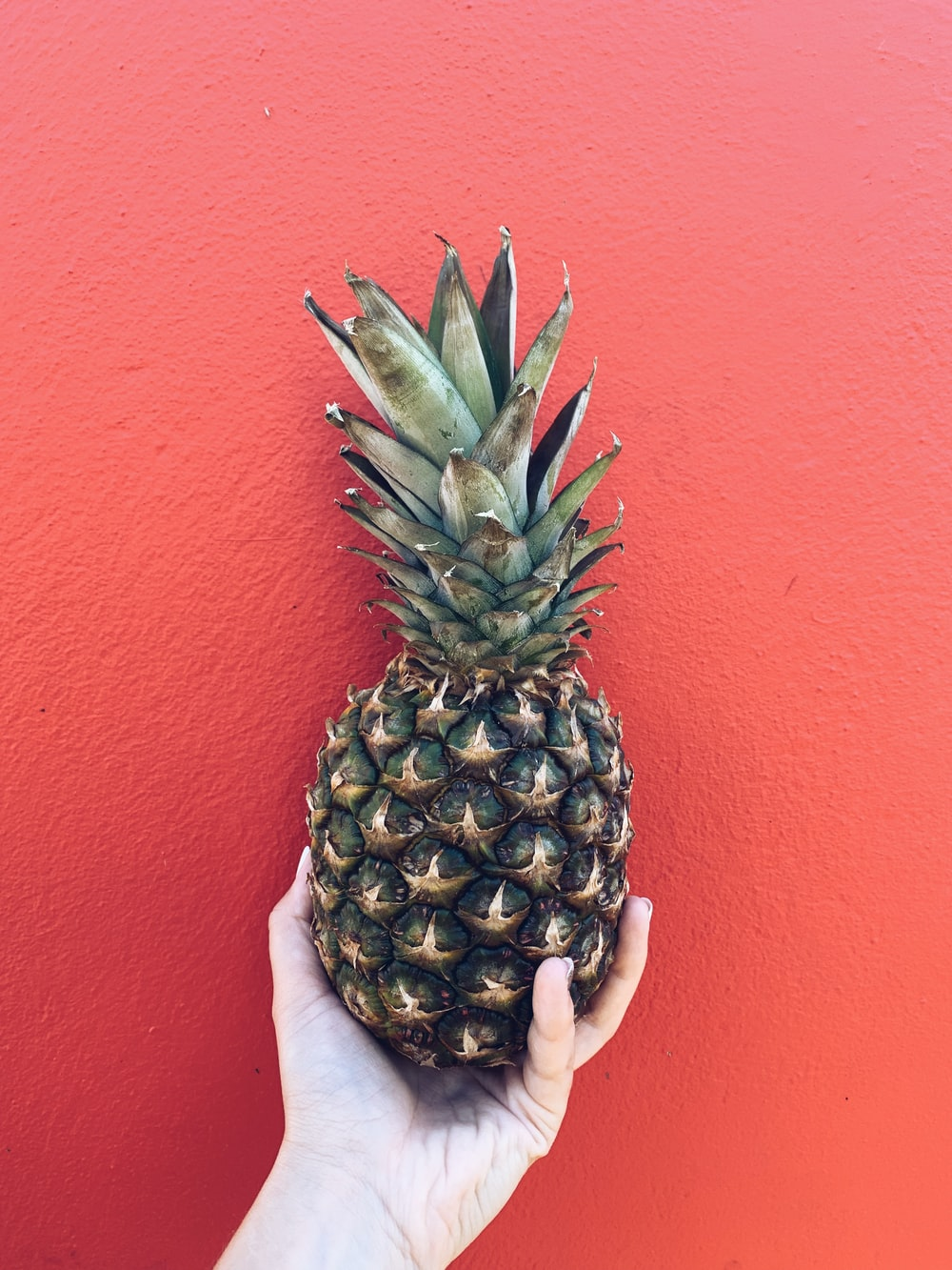 person holding pineapple fruit near red wall