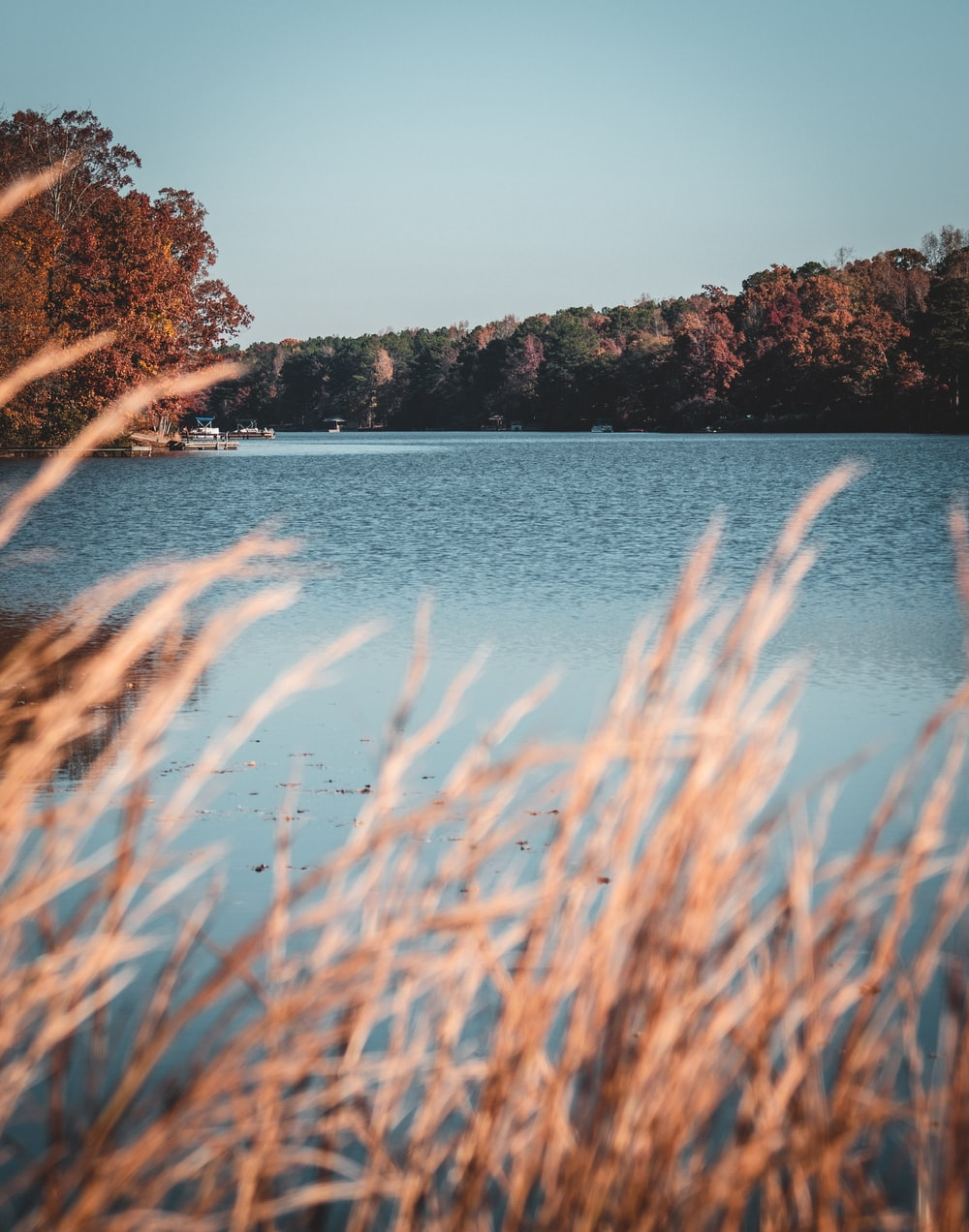 trees beside body of water