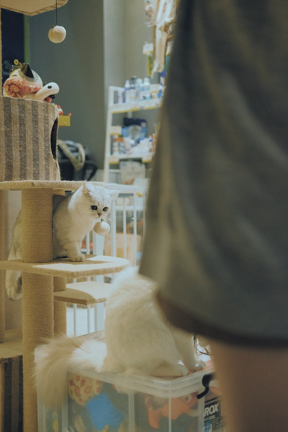 selective focus photo of cat standing on cat tree