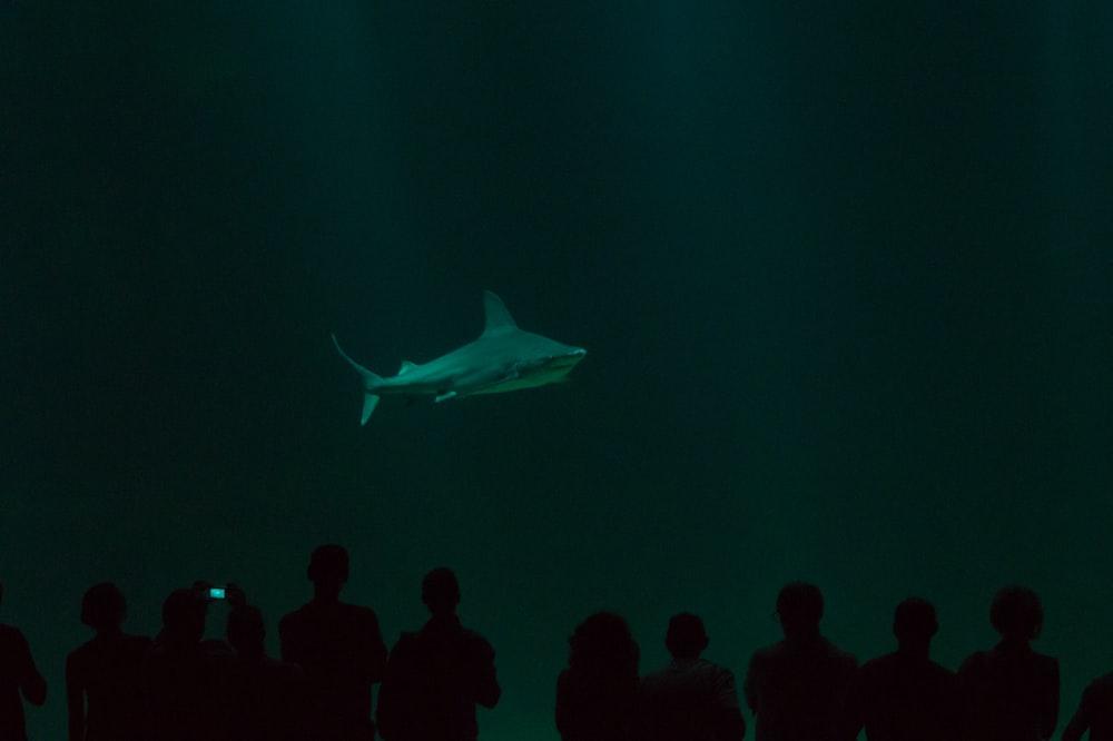 shark in underground aquarium