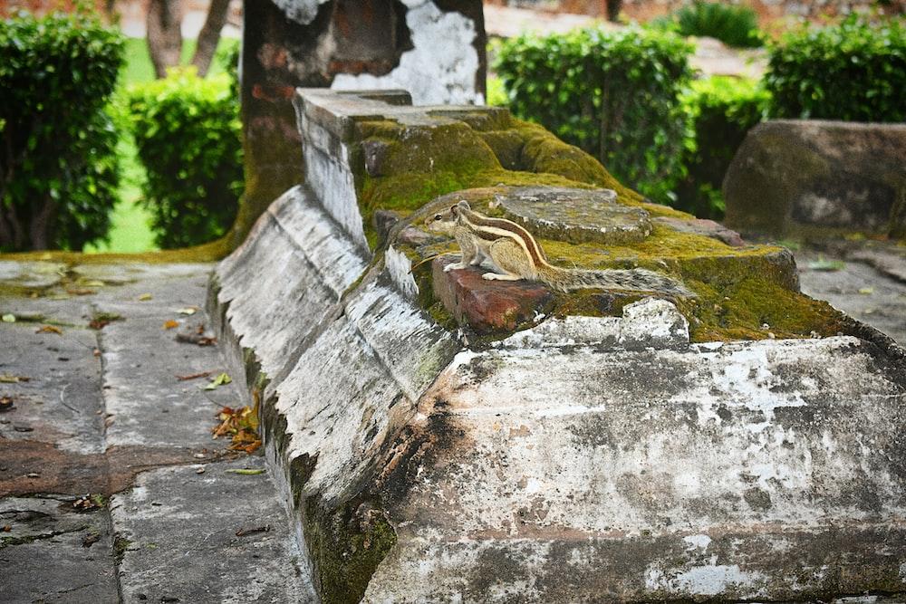 moss on concretes