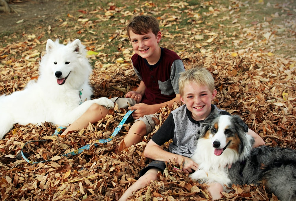 smiling boys with dogs