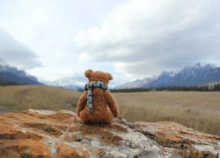 bear plush toy on rock