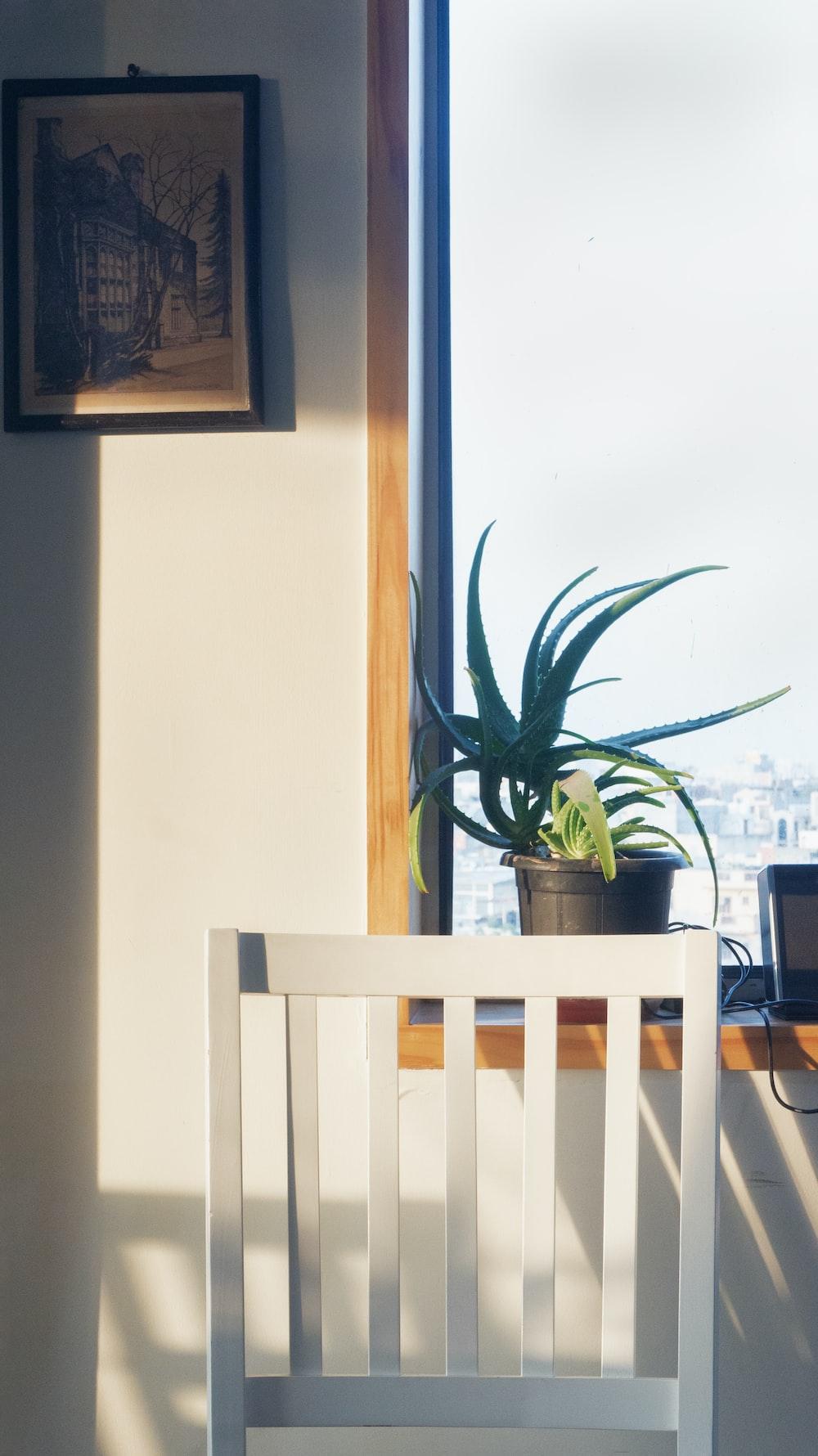 plant on window