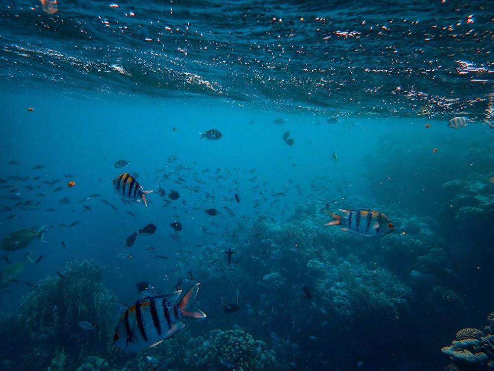 striped school of fish underwater