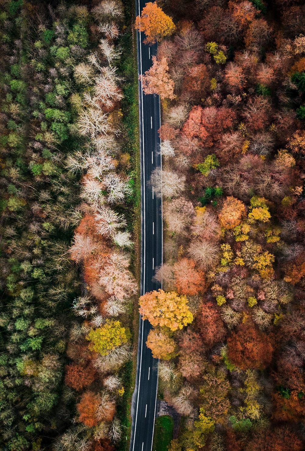 green and pink trees and road