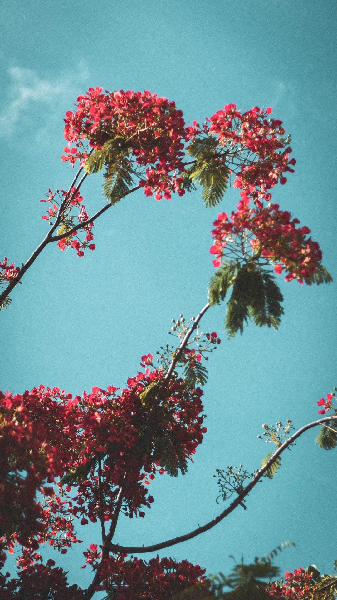 Red flowers on blue sky