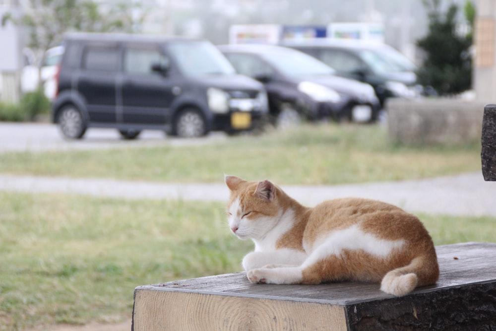 white and orange cat lying on bench