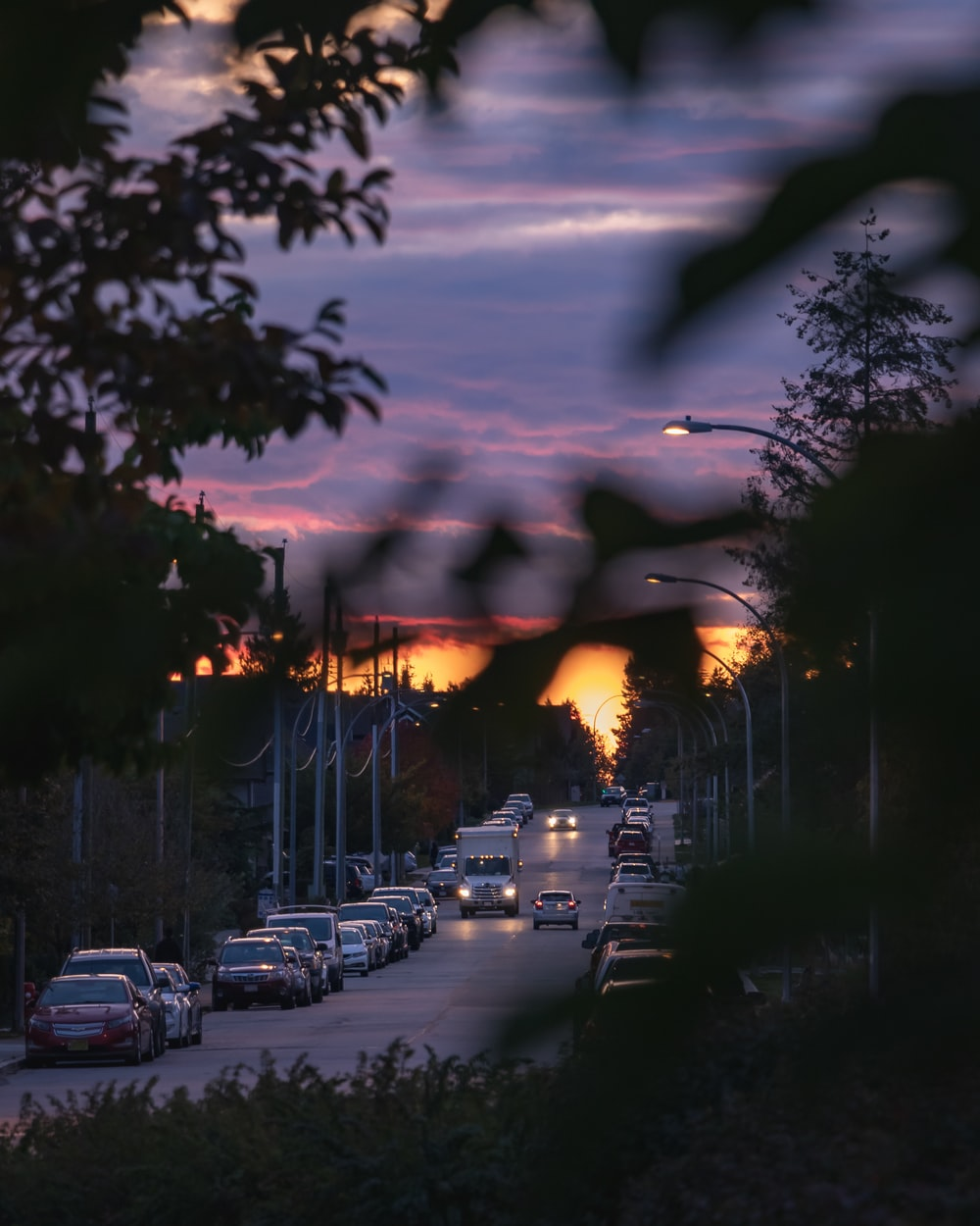 road behind bushes during golden hour