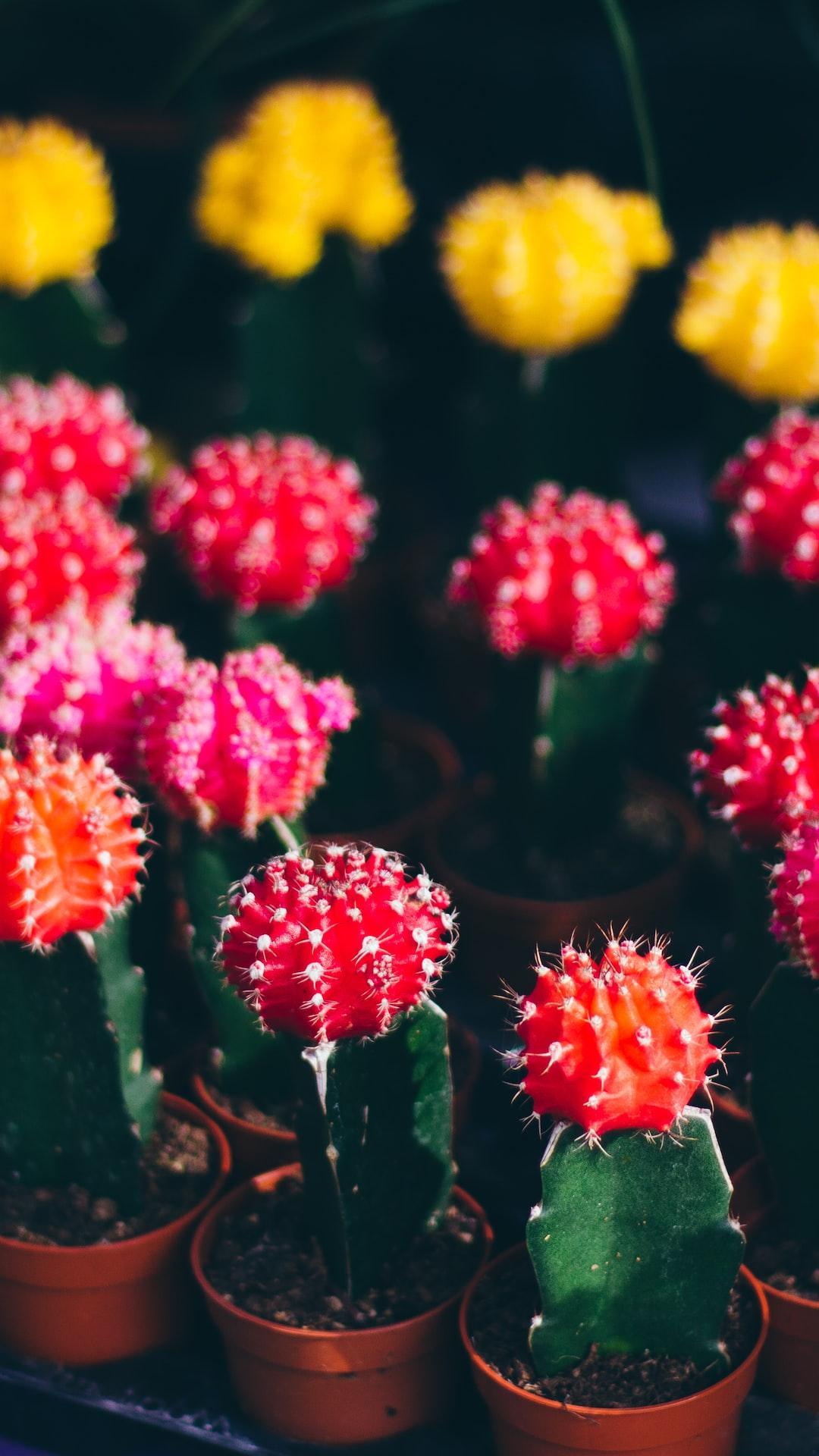Colorful cactus 🌵