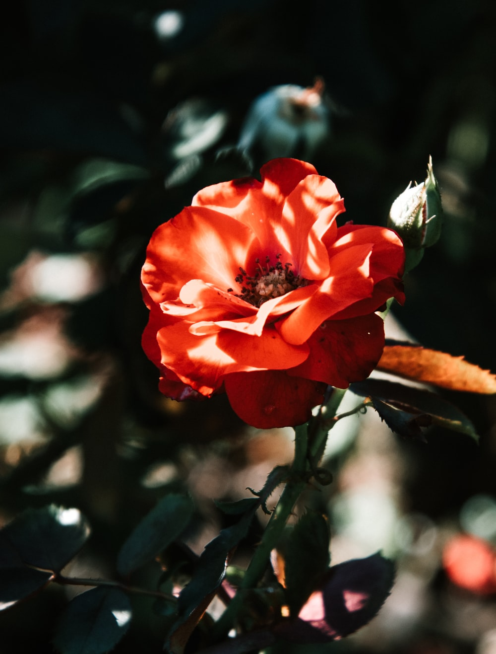 selective-focus photograph of red flower