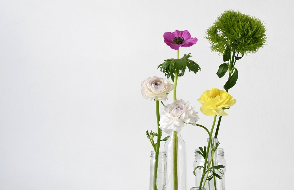 four assorted-color flowers