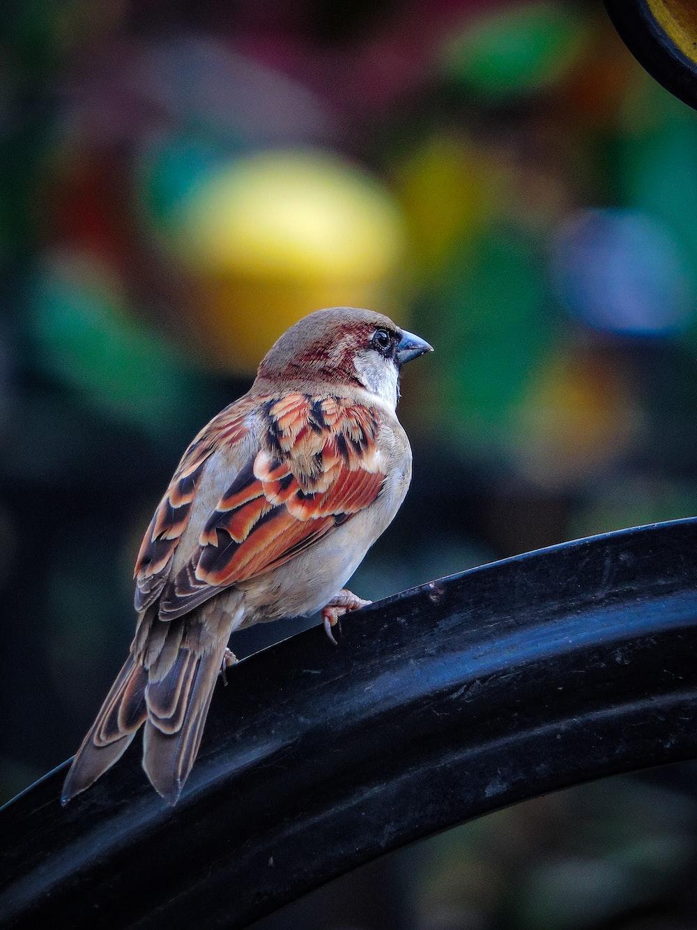 sparrow on black surface