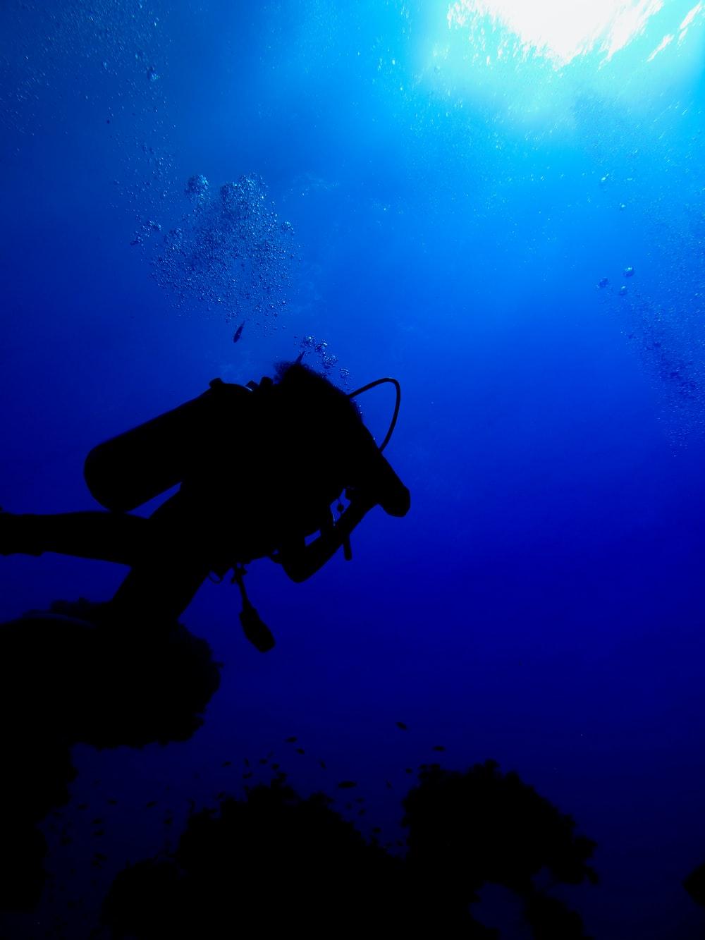 scuba diver beside coral