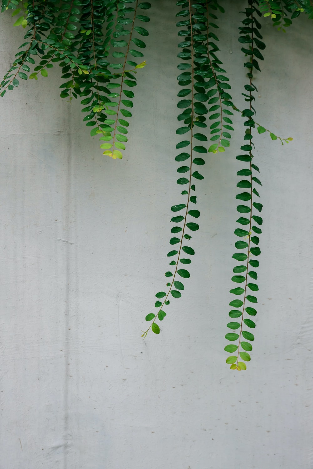 green-leafed plant on wall