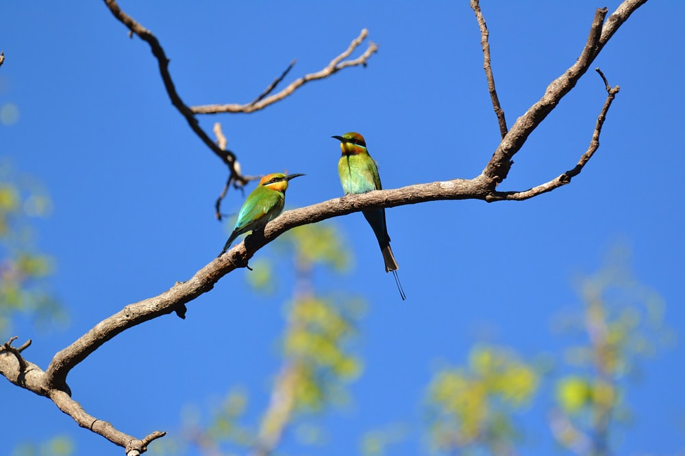 two birds perched on branch