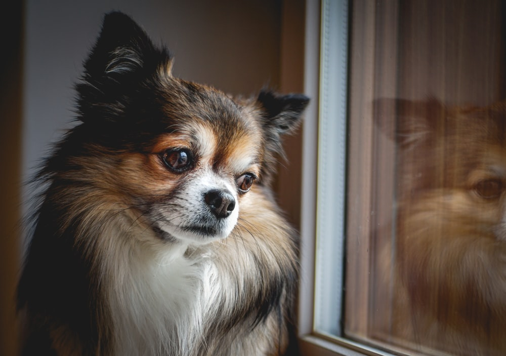 dog beside window