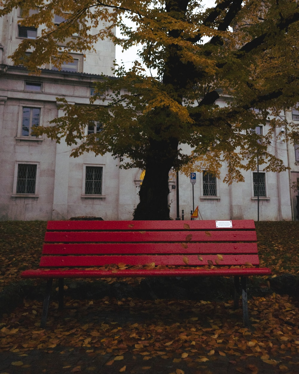 red wooden bench in front of tree