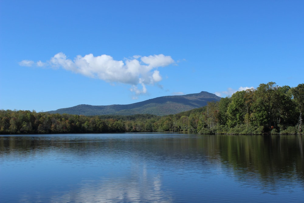 calm water by treeline near mountain during daytime