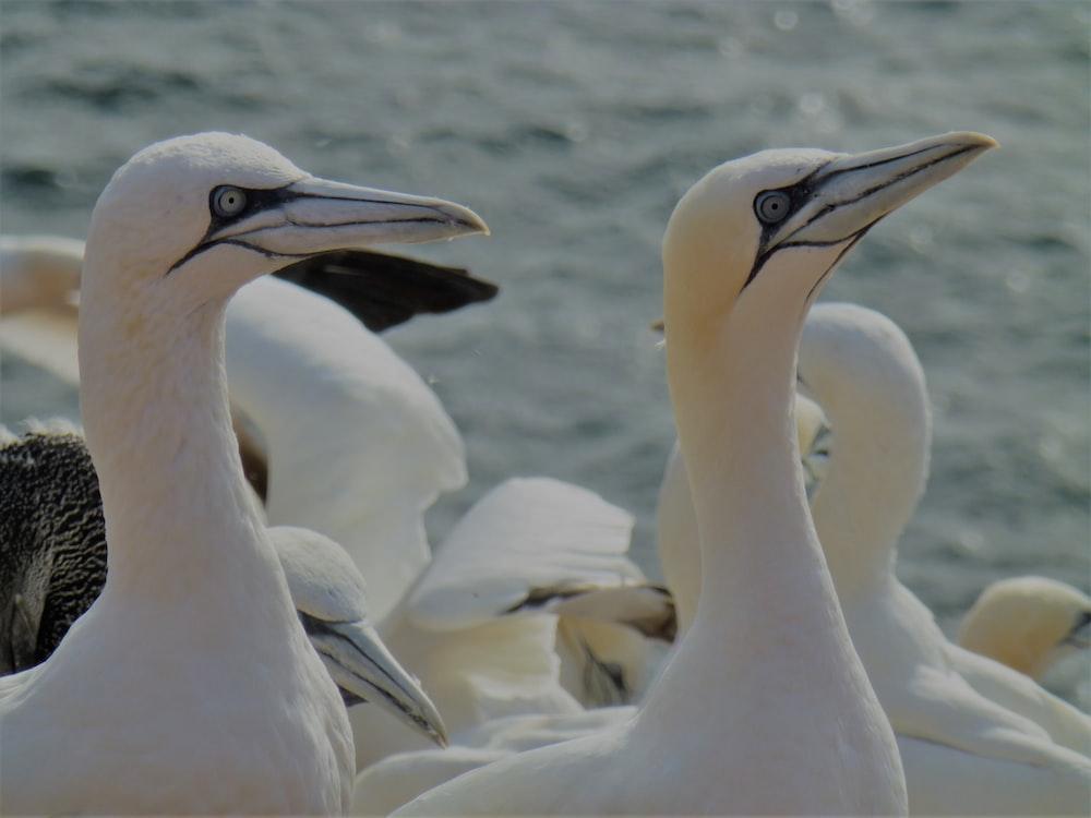white-and-gray birds
