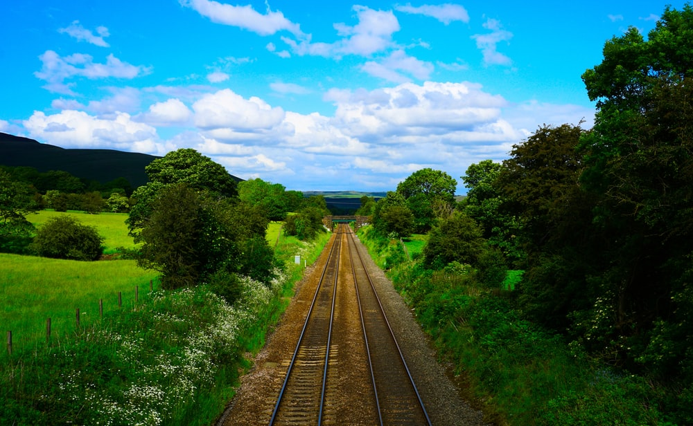 view photography of train rails between trees under blue sky