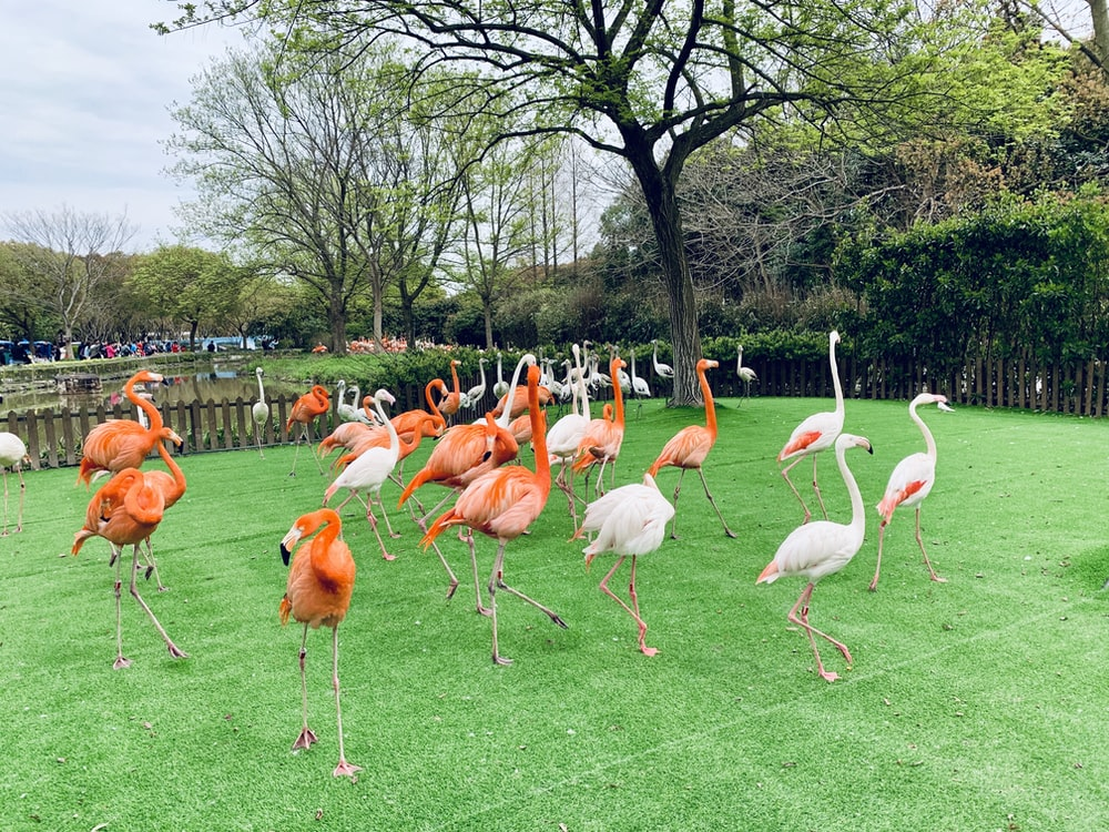 pink and red flamingo decors on field during daytime