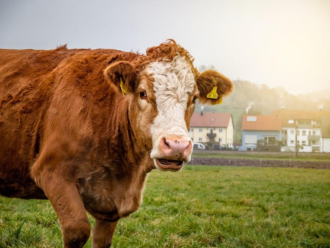 Alpenmilch klingt nach regionaler Milch