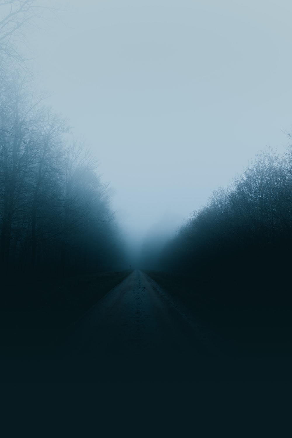 road surrounded with trees covered with mist